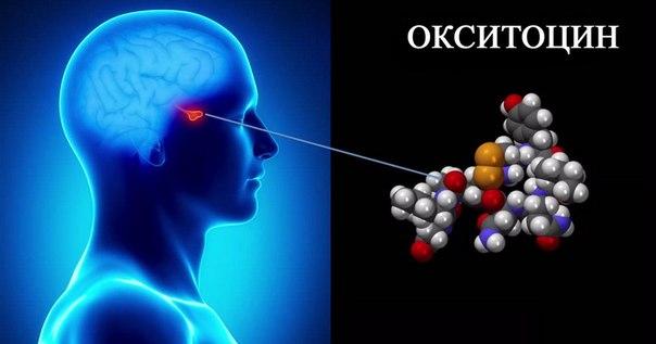 Об окситоцине, гормоне любви (или гормоне агрессии, если его много)