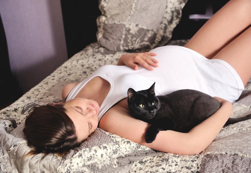 Способы заражения токсоплазмозом, или Ода в защиту кошек