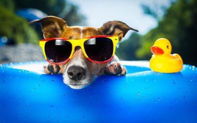 Советы врача: как пережить жару без вреда для здоровья