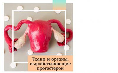 Ткани и органы, вырабатывающие прогестерон