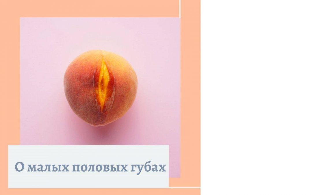 О половых губах